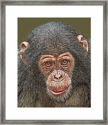 Chimp Portrait Framed Print by Larry Linton