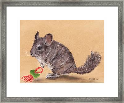 Chinchilla Framed Print by Anastasiya Malakhova