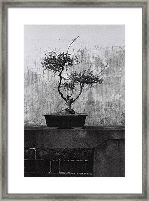 Chinese Garden No.7 / Shoot By Film Framed Print by Fan Ying Hua