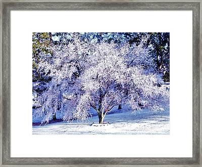 Chinese Maple In Ice Framed Print by Debra Lynch