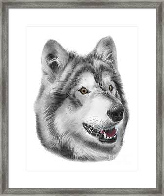 Chinook Framed Print by Peter Piatt