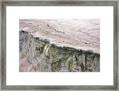 Chinstrap Penguins Crossing An Framed Print by Maria Stenzel