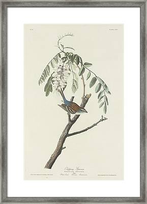 Chipping Sparrow Framed Print by John James Audubon