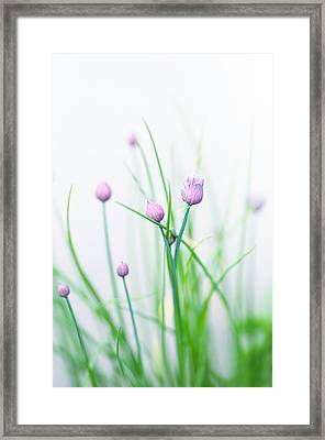 Chives 1 Framed Print by Rebecca Cozart