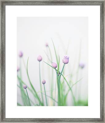 Chives 2 Framed Print by Rebecca Cozart
