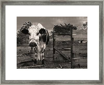 Chocolate Chip At The Stables Framed Print by T Brian Jones