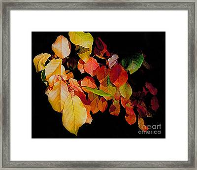 Chokecherry Leaves Framed Print by Terril Heilman