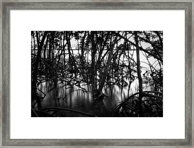 Chokoloskee Mangroves Framed Print by Rich Leighton