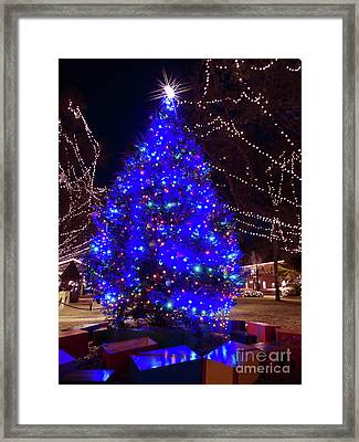 Christmas Tree Downtown St Augustine Framed Print by D Hackett