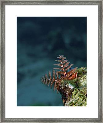 Christmas Tree Worm Lookout Framed Print by Jean Noren