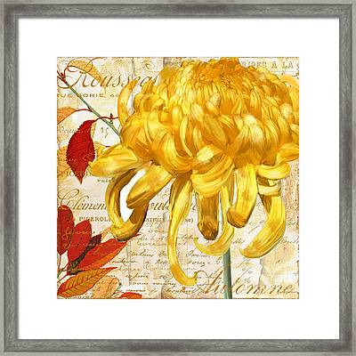 Chrysanthemes Framed Print by Mindy Sommers