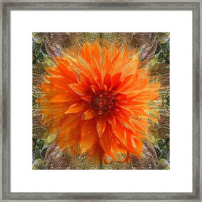 Chrysanthemum Framed Print by Tom Romeo