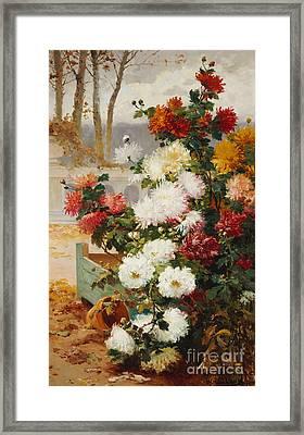 Chrysanthemums In A Walled Garden Framed Print by Eugene Henri Cauchois