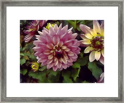 Chrysanthemums Framed Print by John K Woodruff