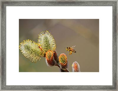 Chubby Legs Framed Print by Donna Kennedy