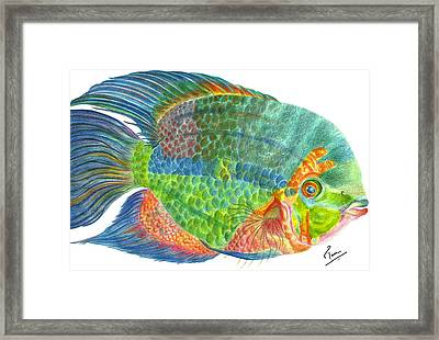 Cichlid - Hypselecara Framed Print by Tina  Albert