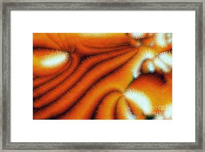 Cilia Framed Print by Ron Bissett