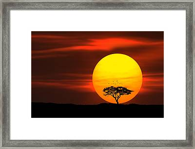 Circle Of Life Framed Print by Bess Hamiti
