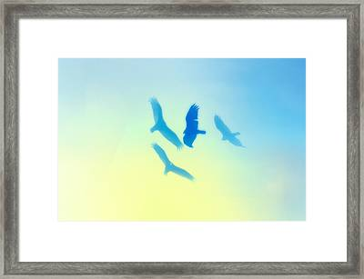 Circling Framed Print by Bill Cannon