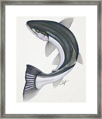 Circling Steelhead Framed Print by Nick Laferriere
