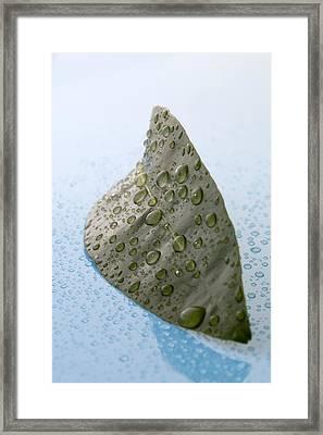 Citrus Leaf Framed Print by Frank Tschakert