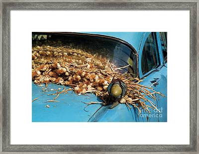Classic American Car With Trailer Full Of Garlic Framed Print by Sami Sarkis