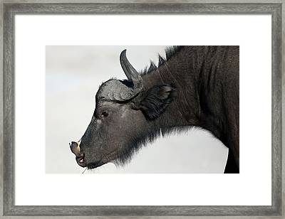 Cleaning Service Framed Print by Kique Ruiz