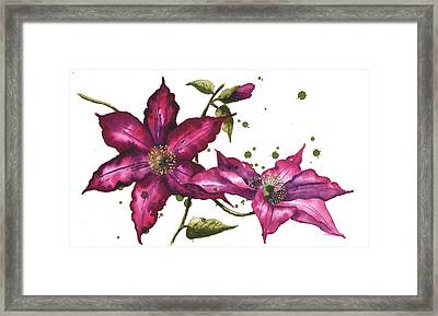 Clematis Painting Framed Print by Alison Fennell