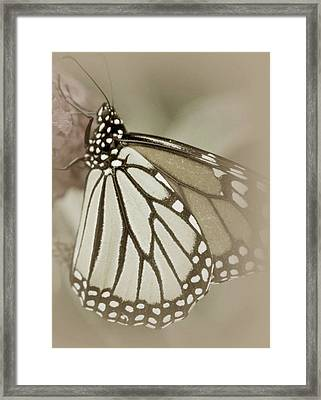 Clever Framed Print by The Art Of Marilyn Ridoutt-Greene