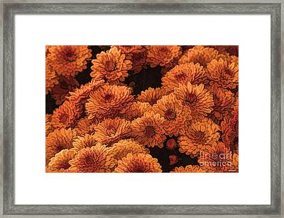 Clockwork Orange Framed Print by Tom Prendergast