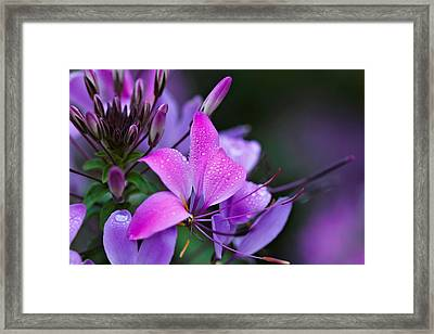 Cloeme Framed Print by Katherine White