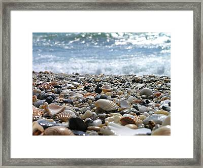 Close Up From A Beach Framed Print by Romeo Reidl