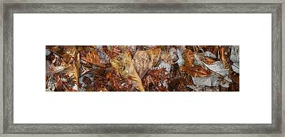 Close-up Of Dead Leaves Framed Print by Panoramic Images