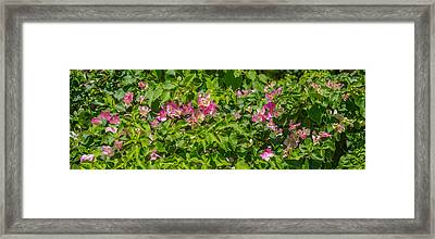Close-up Of Flowers, Venice, Florida Framed Print by Panoramic Images