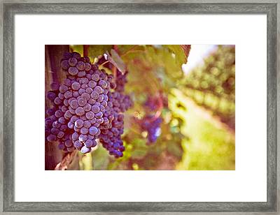 Close Up Of Grapes Framed Print by Boston Thek Imagery