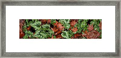 Close-up Of Green And Brown Leaves Framed Print by Panoramic Images