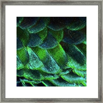 Close Up Of Peacock Feathers Framed Print by MadmàT