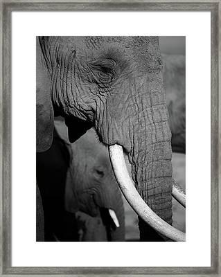 Close Up Of Two Elephants Framed Print by Achim Mittler, Frankfurt am Main