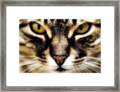 Close Up Shot Of A Cat Framed Print by Fabrizio Troiani