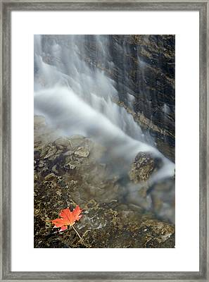 Closeup Maple Leaf And Decew Falls, St Framed Print by Darwin Wiggett