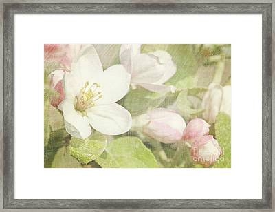 Closeup Of Apple Blossoms In Early Framed Print by Sandra Cunningham