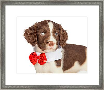 Closup Puppy Wearing Red Christmas Tie Framed Print by Susan Schmitz