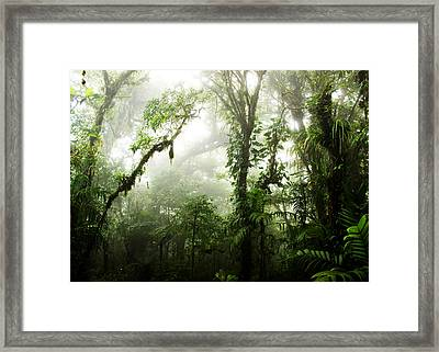 Cloud Forest Framed Print by Nicklas Gustafsson
