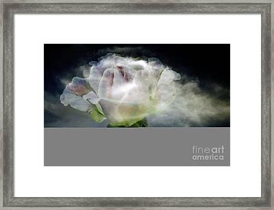 Cloud Rose Framed Print by Clayton Bruster