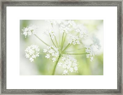 Cloudburst  Framed Print by Connie Handscomb