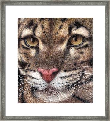 Clouded Leopard Framed Print by Pat Erickson