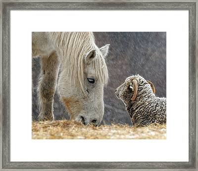 Clouseau And Friend Framed Print by Don Schroder