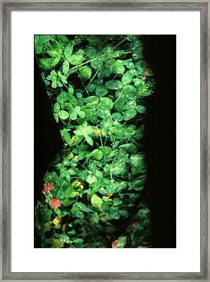 Clover Framed Print by Arla Patch