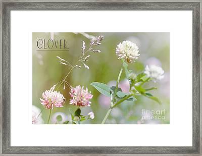 Clover Framed Print by Elaine Manley