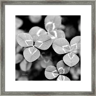 Clover Square Framed Print by Christina Rollo